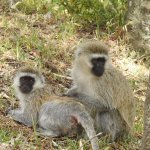 Monkeys we saw on our way out