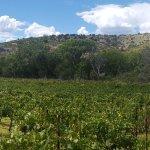 The Vineyard behind Page Spring Cellars