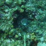 Foto de Aqua Marine Dive Center