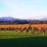 Great photo of the stunning Yarra Valley wine region!
