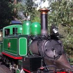 Take a historic steam train ride on the Puffing Billy through the lush forests of Mount Dandenon