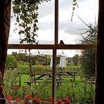through the window to the garden