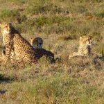 Woodbury Tented Camp, Amakhala Game Reserve Foto
