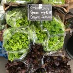 Local organic lettuces for sale!