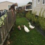 De charmant canards se promènent sur le site, deux étangs de pêche avec des truites excellentes