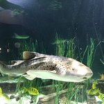 Shark in relatively small tank