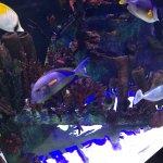 Exotic Fish Tank