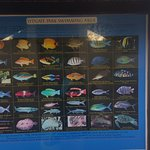 Fish varieties at Lydgate Beach -- we saw many more not on this chart.