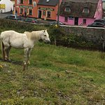 Peggy, the wild Irish horse grazing in the field below the Sea View House in Doolin.