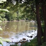 Relax on the banks of the Yough River