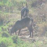 Photo of Shaba National Reserve