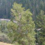 L'acces direct à Grand Teton