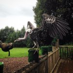 Gandalf the Vulture - their largest flying bird
