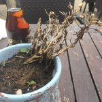dead plant on the table.. it's not halloween yet!!