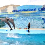 Cuba's national aquarium isn't Sea World. Stay at home if that's what you're looking for.