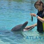 @ Dolphin Cay