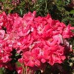Rose Garden in Avery Park
