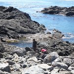 The tide pools close by were a real learning experience for our young city slicker friends