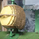 Bees industrially will build anywhere it seems!