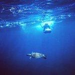 Magic SEABOB turtle encounter at Shell Beach
