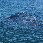 Photo of Ivanhoe Sea Safaris