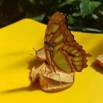 Zone de nourissage pour observer les papillons