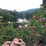 Roses, river and mountains, a lovely view.
