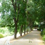 Photo de Parc de Belleville