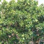 Fruit Trees!