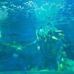 The main aquarium looks brilliant here.