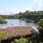 Bilde fra Amazon Turtle Lodge