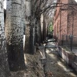 Acequia y árboles