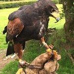 Foto North Devon Hawk Walks