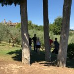 Photo of Sovestro in Poggio vineyard
