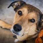 Riley was rescued from the Round Valley Shelter and serves as the sweet mascot of Foxfire at Alp