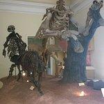 Esqueleto de uma preguiça gigante e outros animais pré-históricos