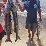 2016 Catch - Barracuda