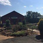 Gardens at Barboursville
