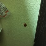 Unclean room, stains on wall
