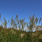 A grassy area providing a haven for birds!