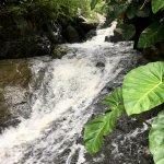 Photo de Rainforest Inn
