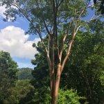 Lancetilla Botanical Garden Foto