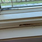 Dirty window sills with dead bugs