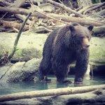 Aboriginal Journeys Wildlife and Adventure Tours Foto
