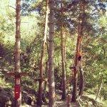 Circuito en árboles.
