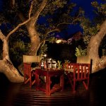 Fig Tree Deck