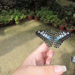 This butterfly didn't want to be released!