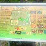 Great Bird Island information