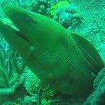 Foto de Dive Grenada