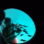 Scuba diving to feed the fish